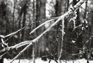 Snow3_1