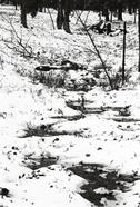 Snow5_1